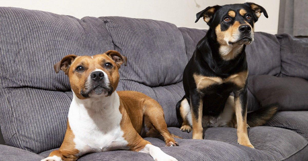 Un couple a abandonné l idée d acheter un nouveau canapé