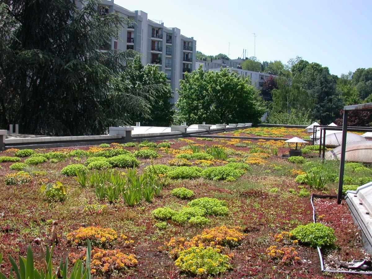 Acrotère toiture Terrasse toitures Terrasses Végétalisées Ttv Siplast L aspect - Idees ...
