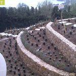 Aménager Un Jardin En Pente Aménager Un Jardin En Terrasses Détente Jardin