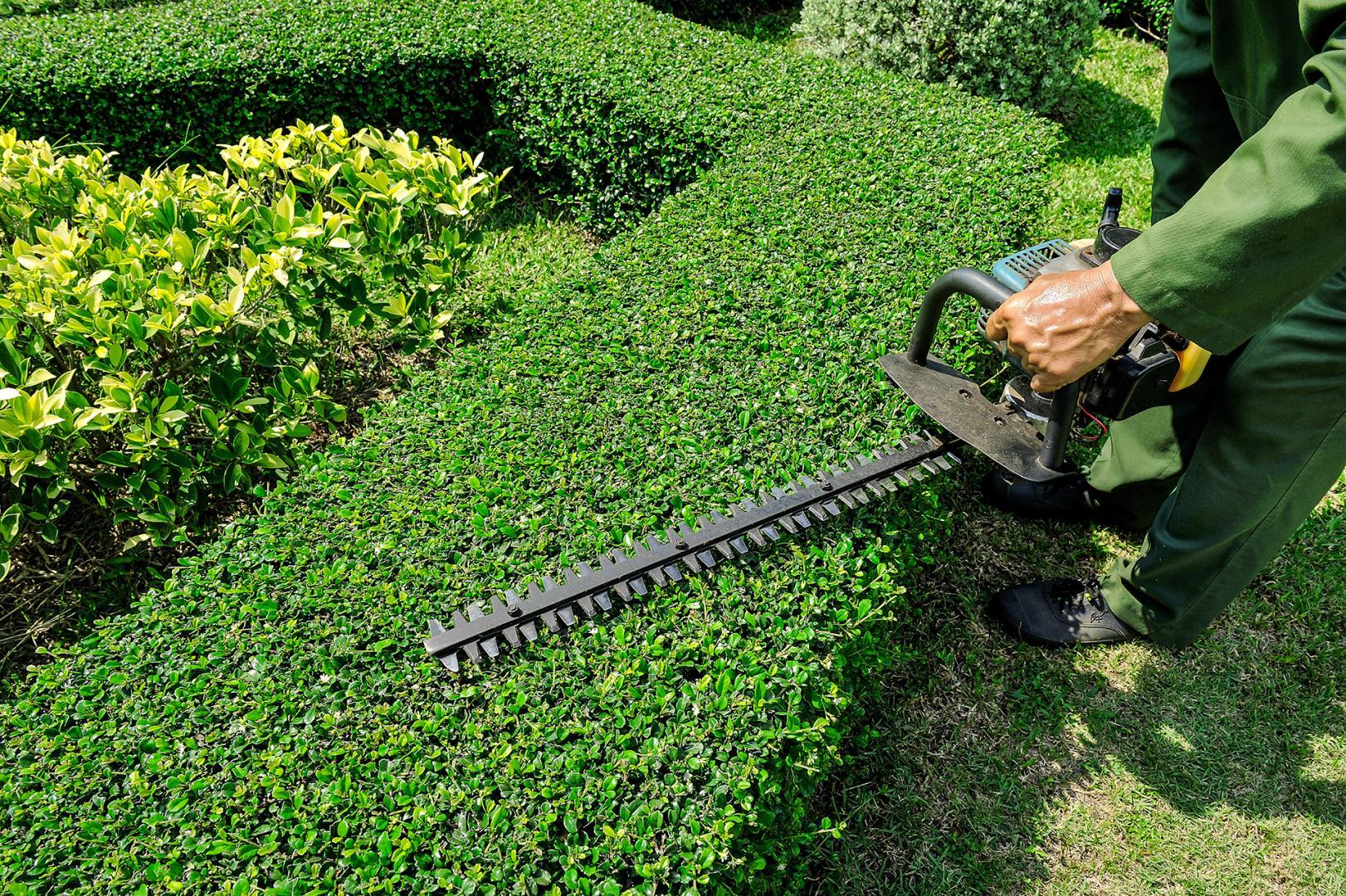 Entretien espace vert jardin aménagement espace vert