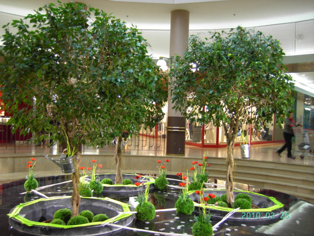 Location de plantes C Déco Paysagiste