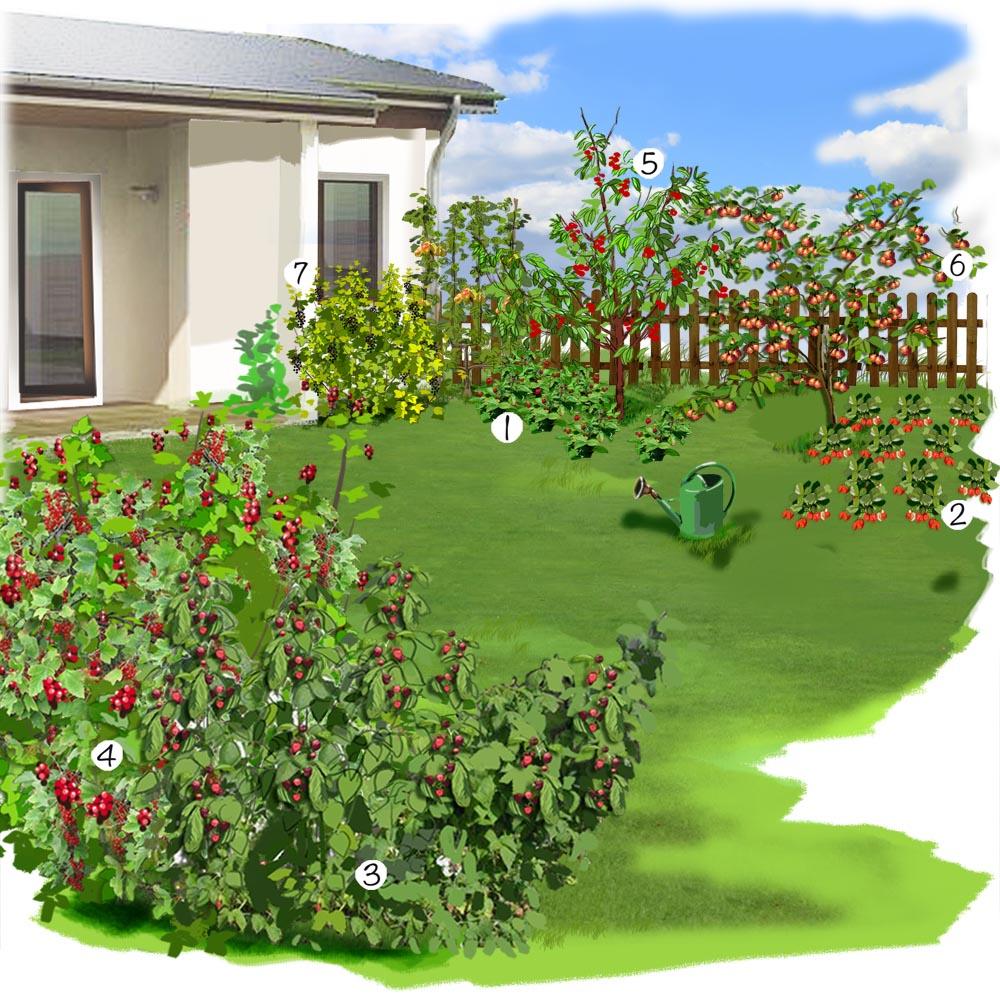 Petit jardin et ses fruits Jardin potager Jardineries