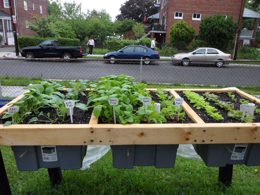 Self Watering Veggie Table potager
