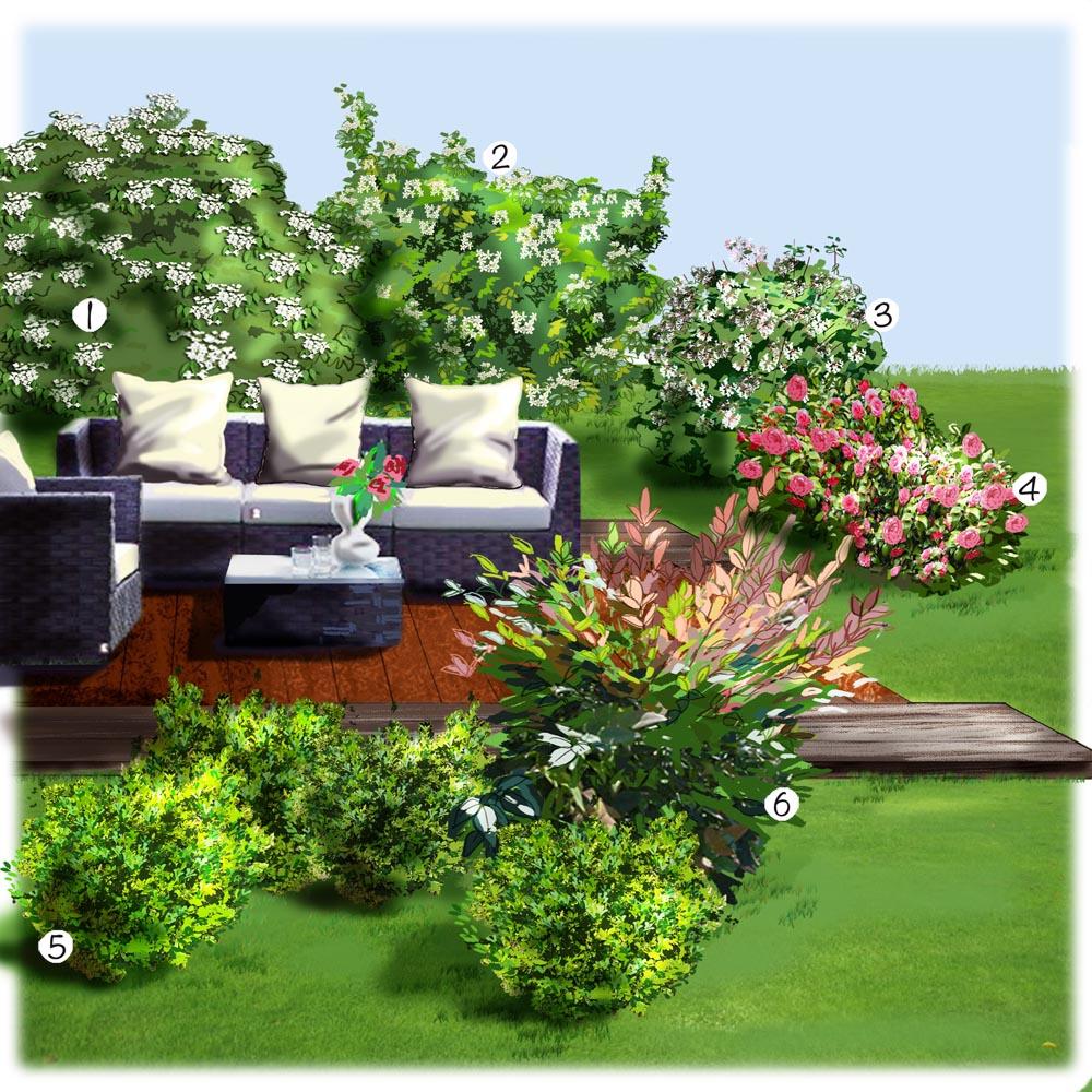 Les arbustes de la terrasse Terrasse balcon et