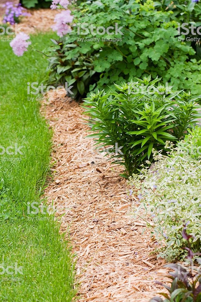 Bordure De Fleurs Vivaces Jardin Avec Copeau De Bois Du