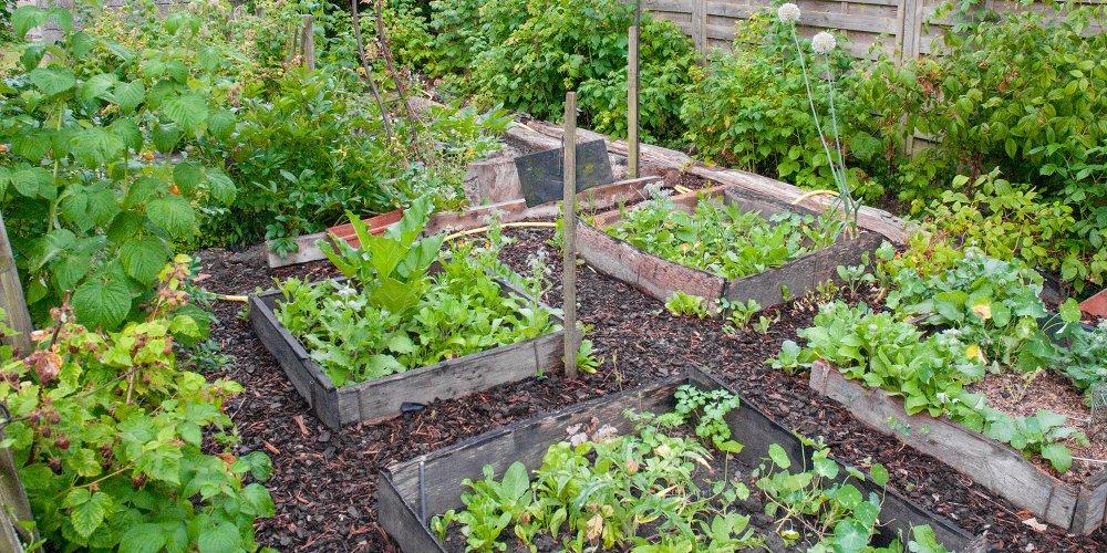 ment faire un jardin potager en permaculture Marie