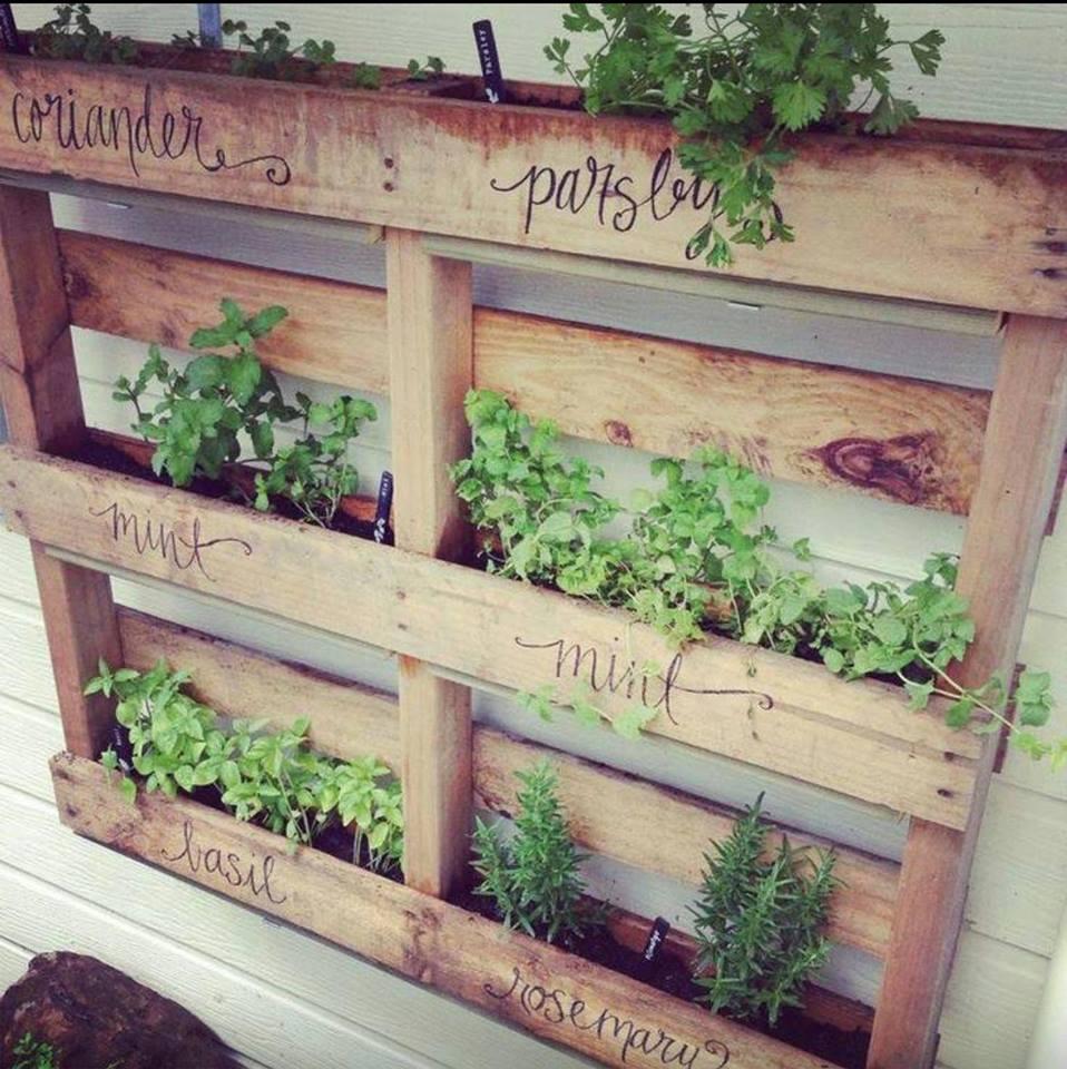 Cuisine Jardin Vertical Créer Optimiser Décorer