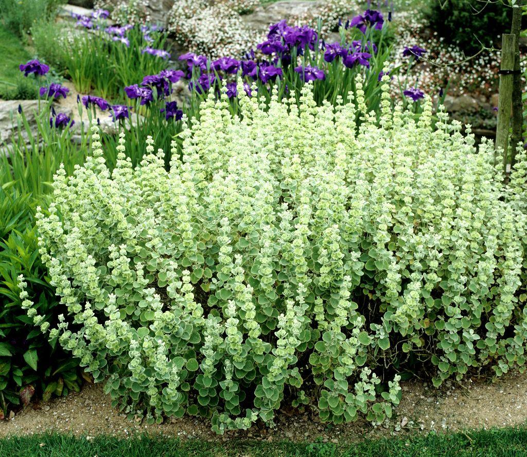 Couvre Sol Croissance Rapide jardin japonais plantes couvre sol jardin japonais zen idées