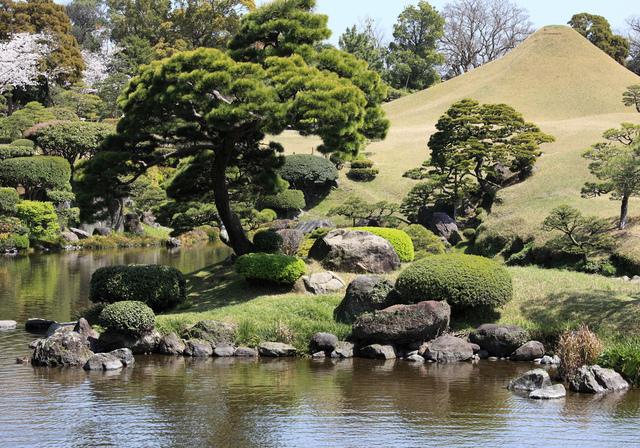 Jardin japonais découverte caractéristiques et végétaux