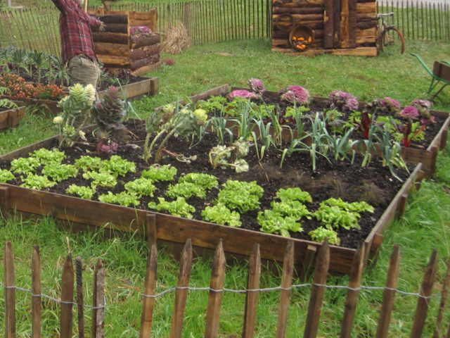 Les différentes astuces pour son jardin potager Grands