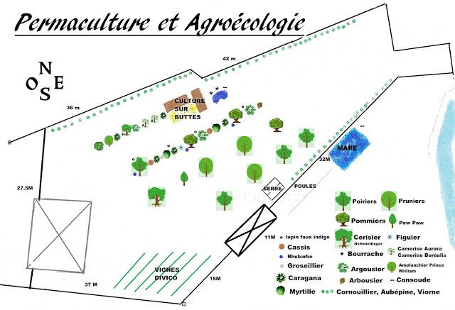 Potager permaculture et petit élevage Plan du futur