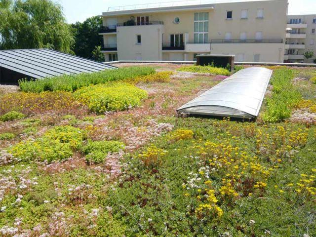 Toit Terrasse Végétalisé Le toit Terrasse En 10 Questions