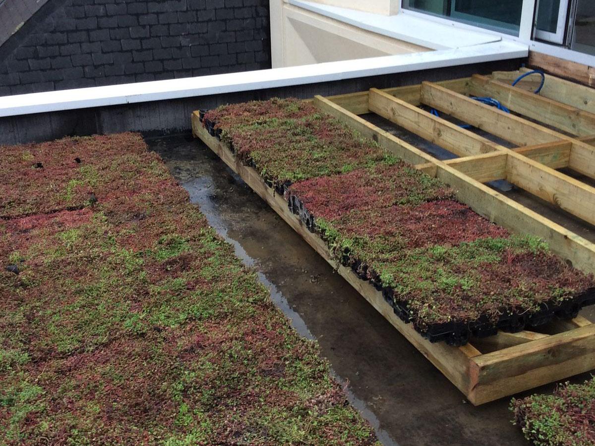 Pose Couverture Toiture Plate Toit Terrasse Végétal