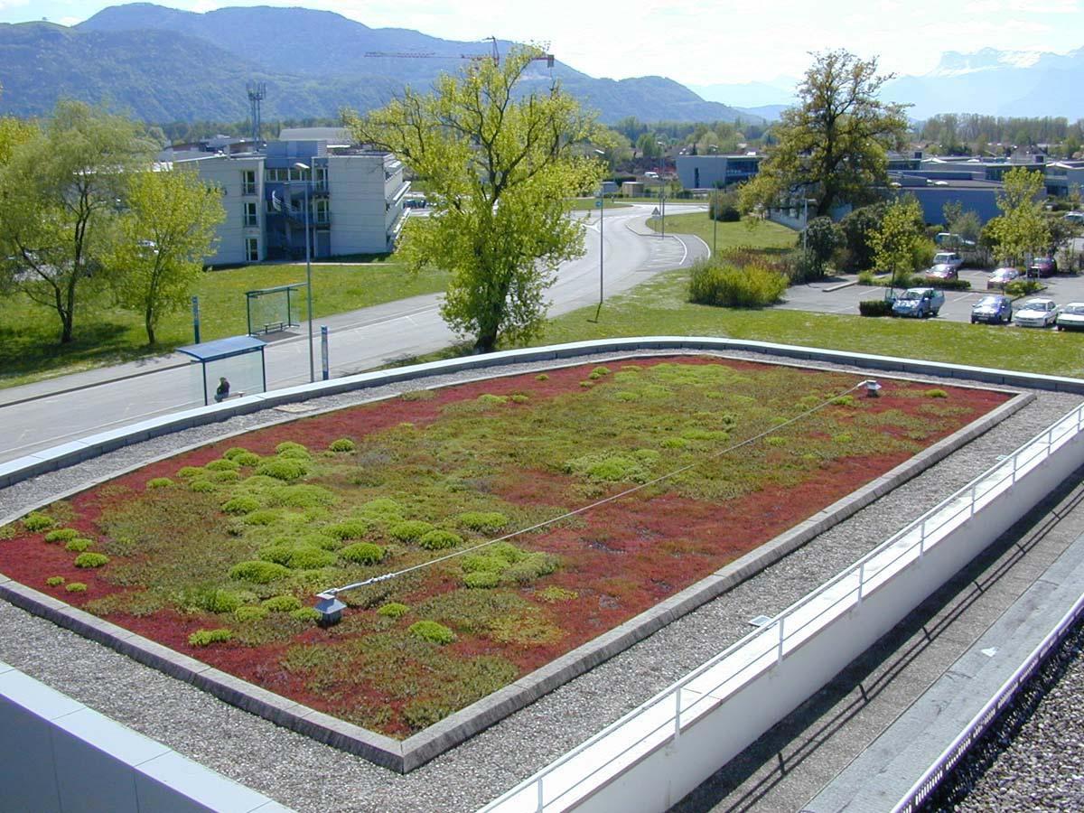 Toiture Terrasse Végétalisée toitures Terrasses Végétalisées Ttv Siplast L aspect