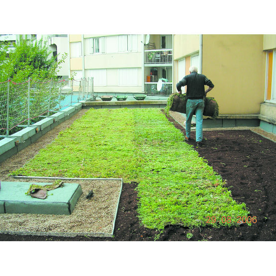 Tapis de végétalisation pour toiture terrasse