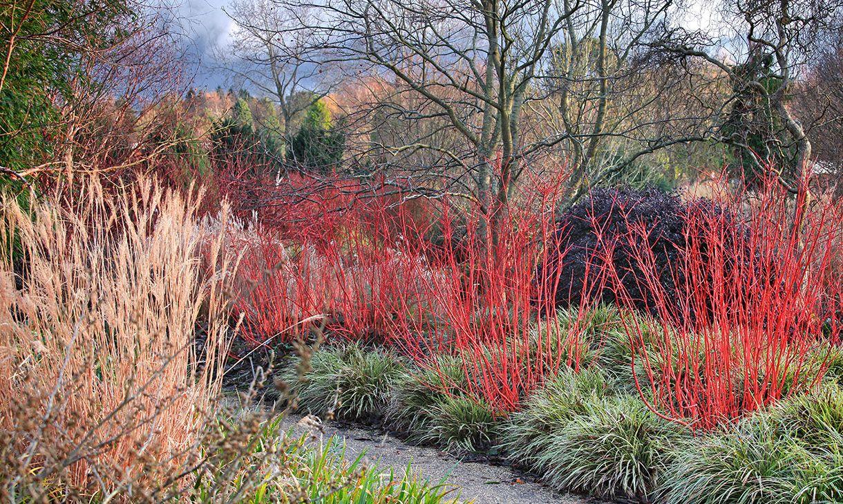 5 Idées Pour Un Jardin Beau Et Coloré En Hiver | Beaux ... dedans Ecorces Jardin