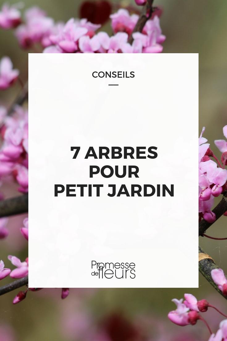 7 Arbres Décoratifs Et Parfaits En Petits Jardin - Notre ... concernant Arbre Pour Petit Jardin