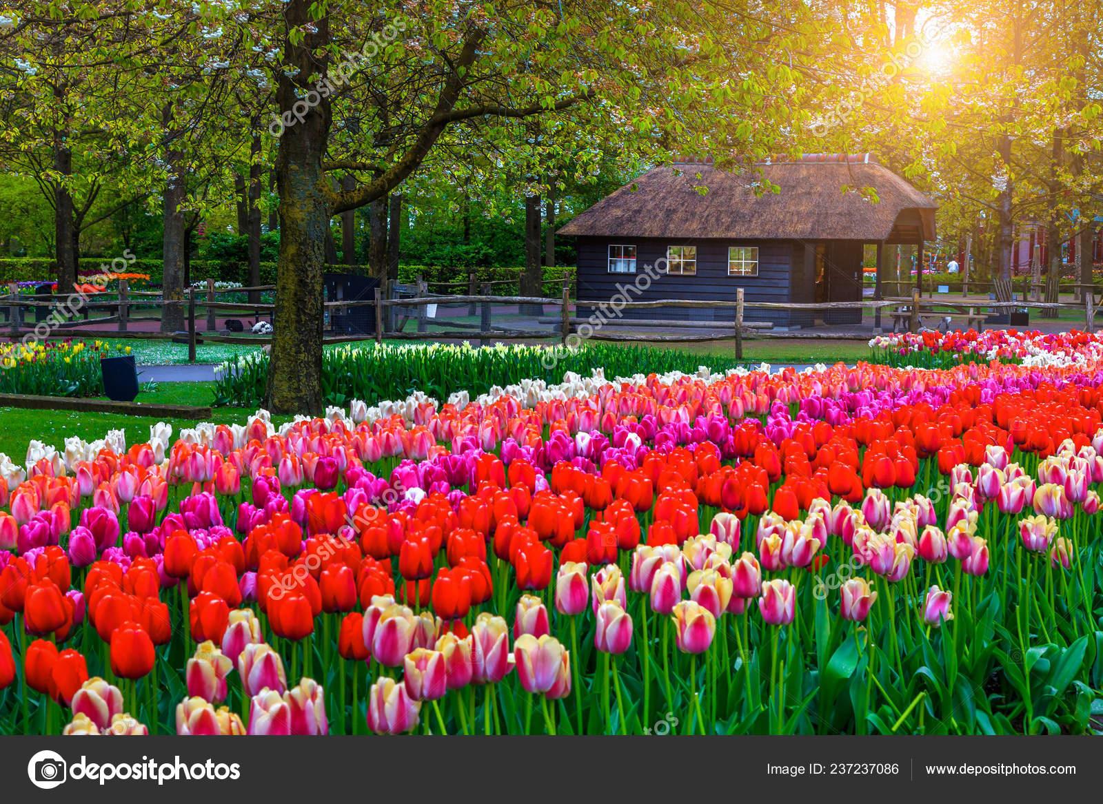 Admirable Spring Garden Landscape Fabulous Keukenhof Garden ... dedans Jardin De Keukenhof