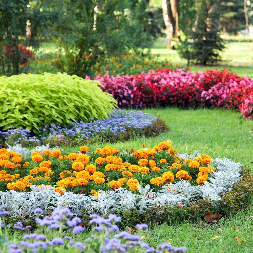 Allées, Bordures, Paliers : Découpez Votre Jardin Selon Le ... encequiconcerne Delimitation Jardin