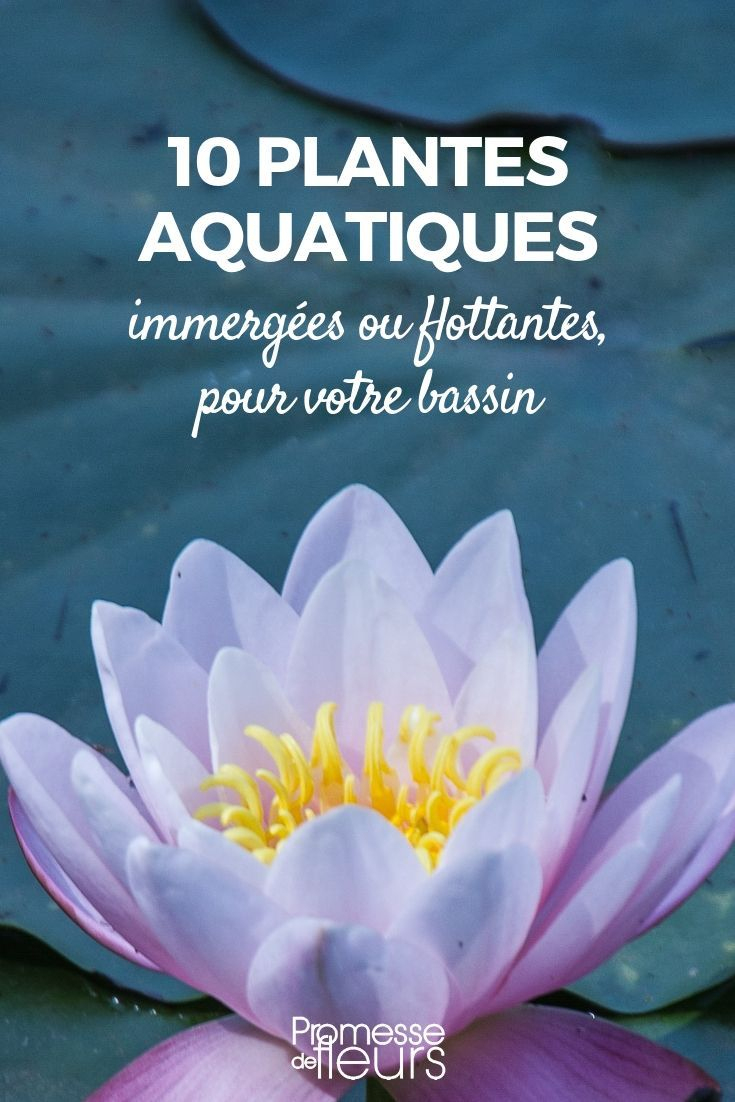 Bassin : 10 Plantes Aquatiques, Immergées Ou Flottantes ... intérieur Plante Bassin De Jardin