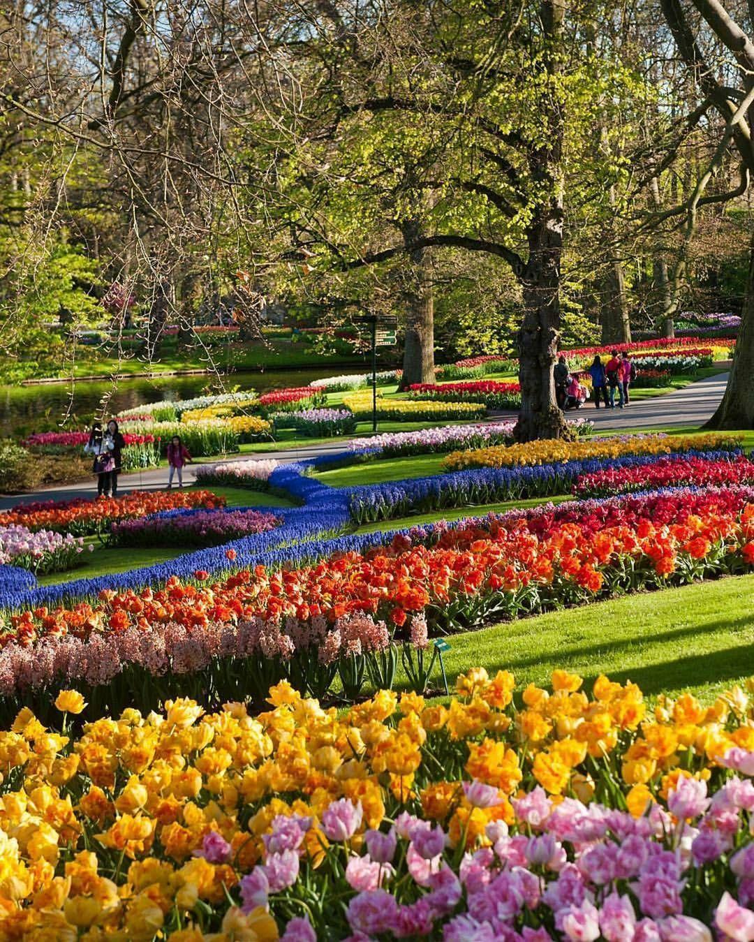 Beautiful Flowers During The Tulip Bloom At Keukenhof ... concernant Jardin De Keukenhof