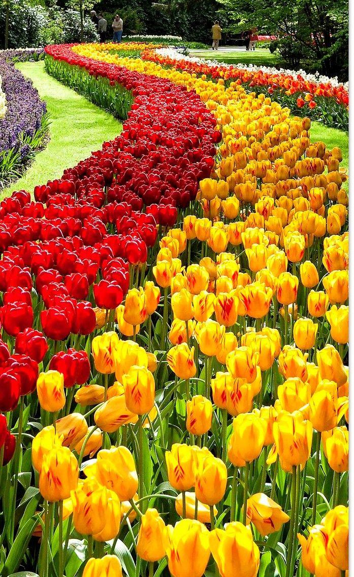 Beautiful Keukenhof Gardens Netherlands | Jardines Bonitos ... intérieur Jardin De Keukenhof