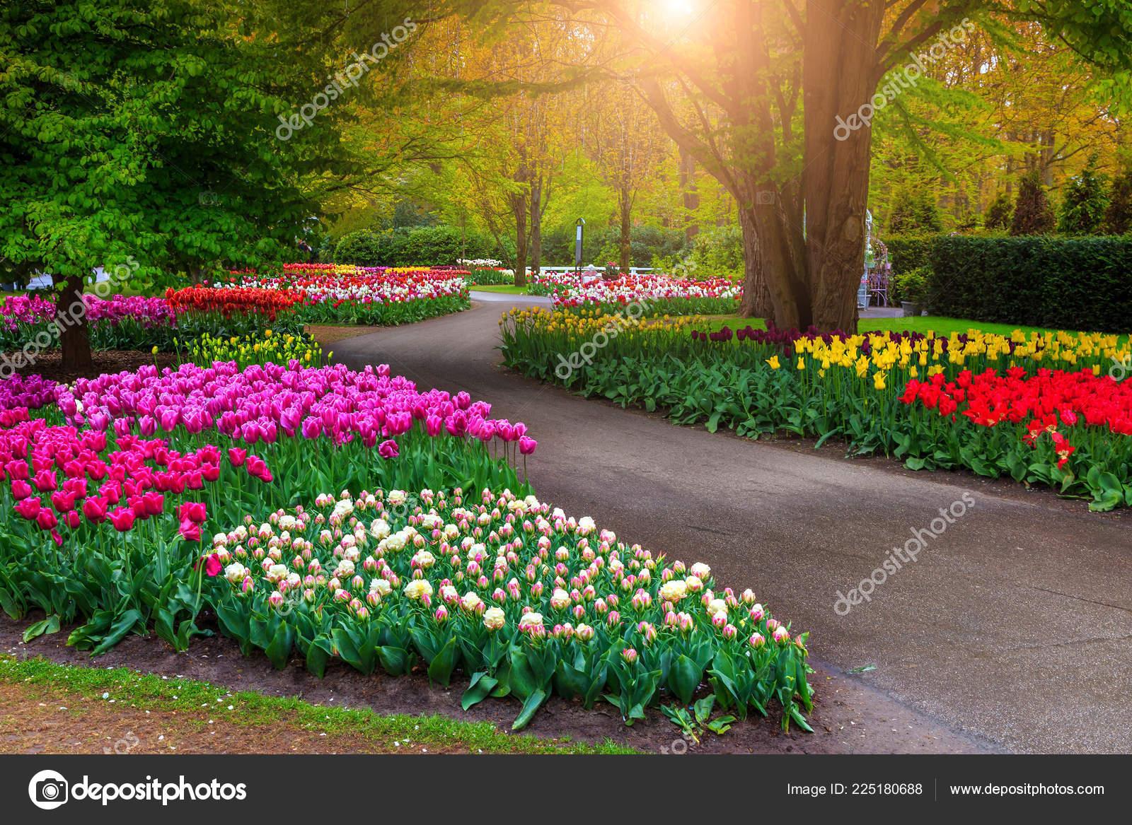 Beautiful Spring Landscape Fabulous Keukenhof Garden ... encequiconcerne Jardin De Keukenhof