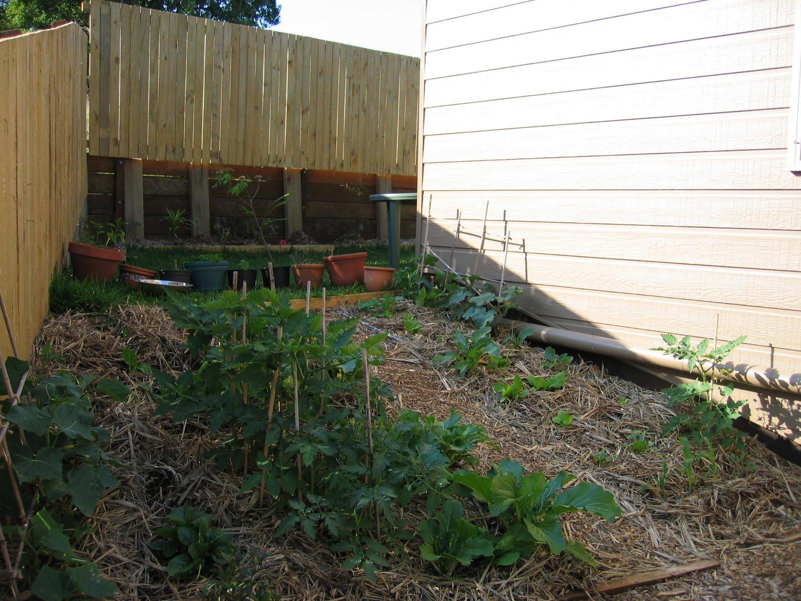 Blog Pascal: Jardin Potager pour Ecorces Jardin