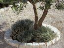 Bordure De Jardin Plastique Castorama Amazing Finest Gazon ... tout Bordure De Jardin En Pierre
