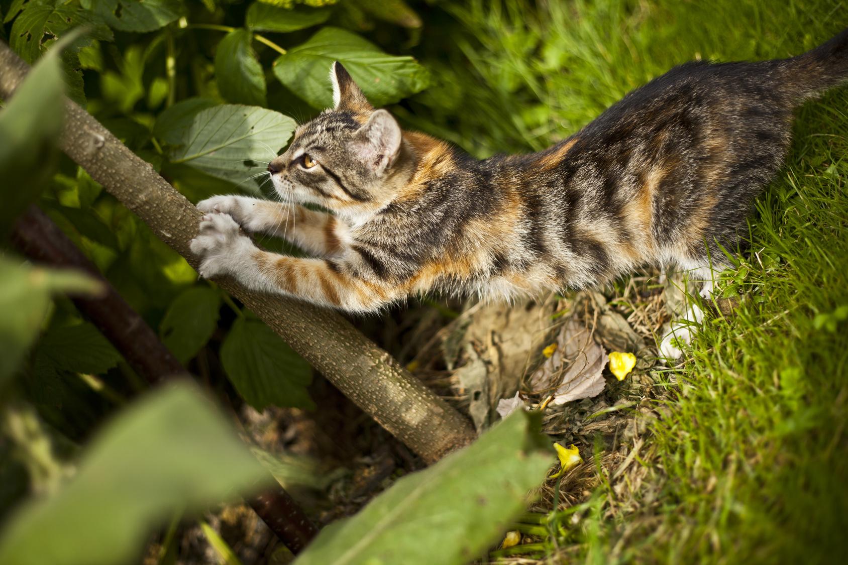 Comment Éloigner Les Chats De Son Jardin ? Nos Conseils dedans Repousse Chat Jardin