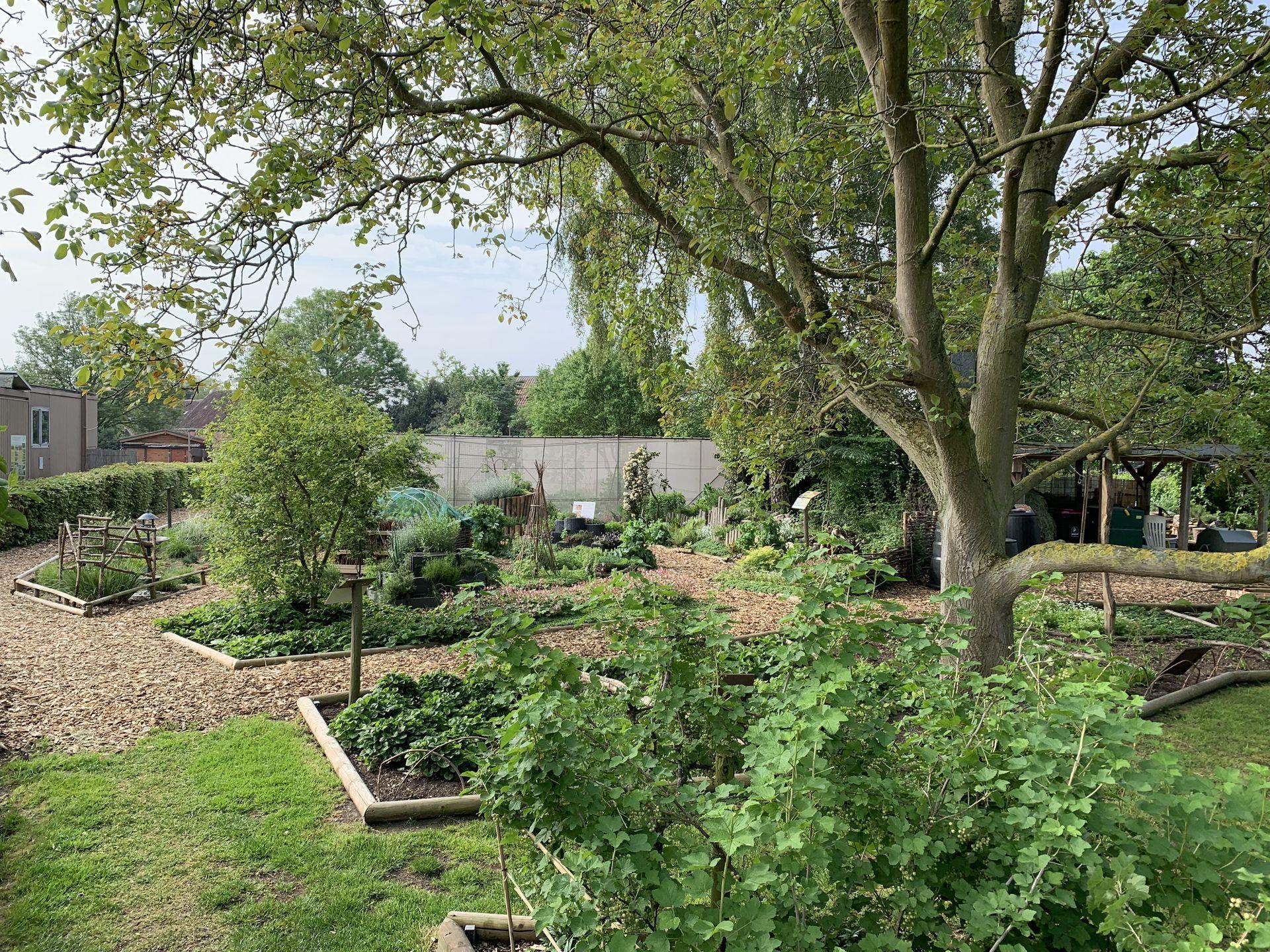 Comment Et Pourquoi Pailler Au Jardin ? à Copeaux De Bois Jardin