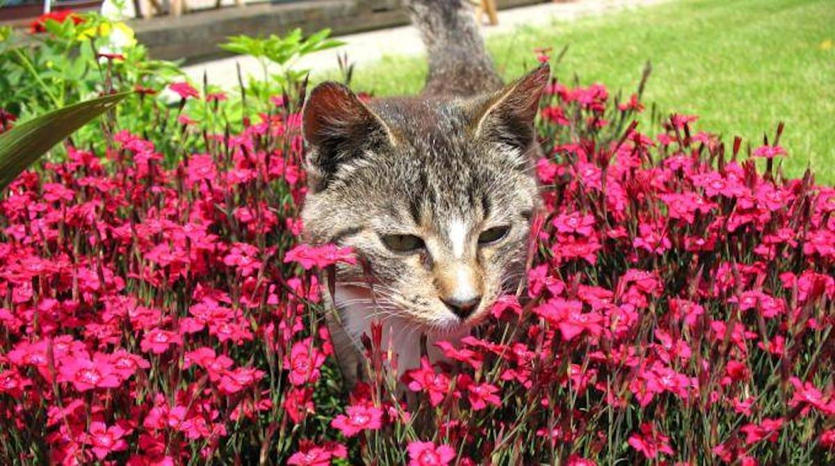 Comment Faire Fuir Les Chats De Votre Jardin ? encequiconcerne Repousse Chat Jardin