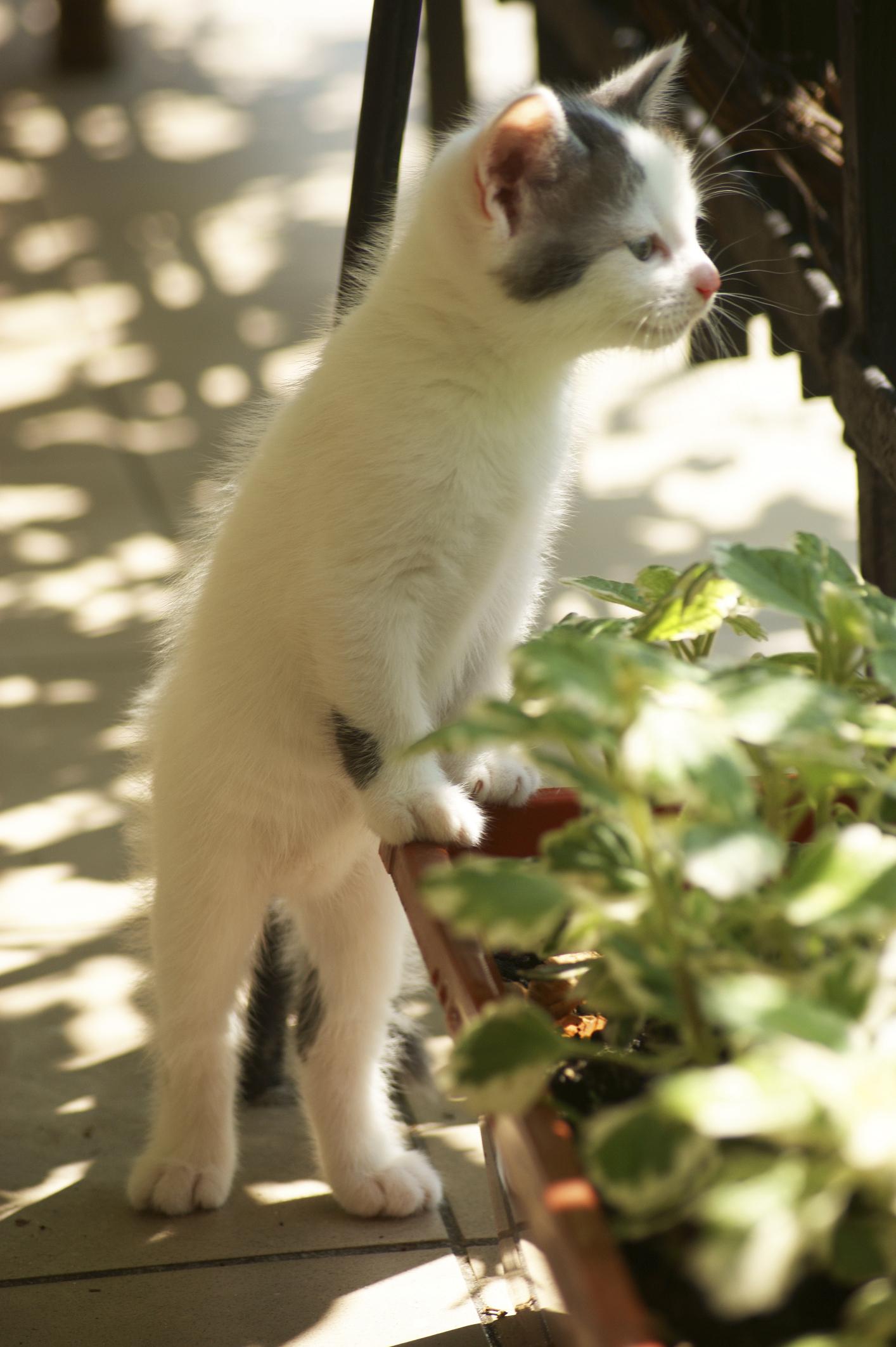 Comment Faire Fuir Les Chats ? - Ooreka avec Repousse Chat Jardin