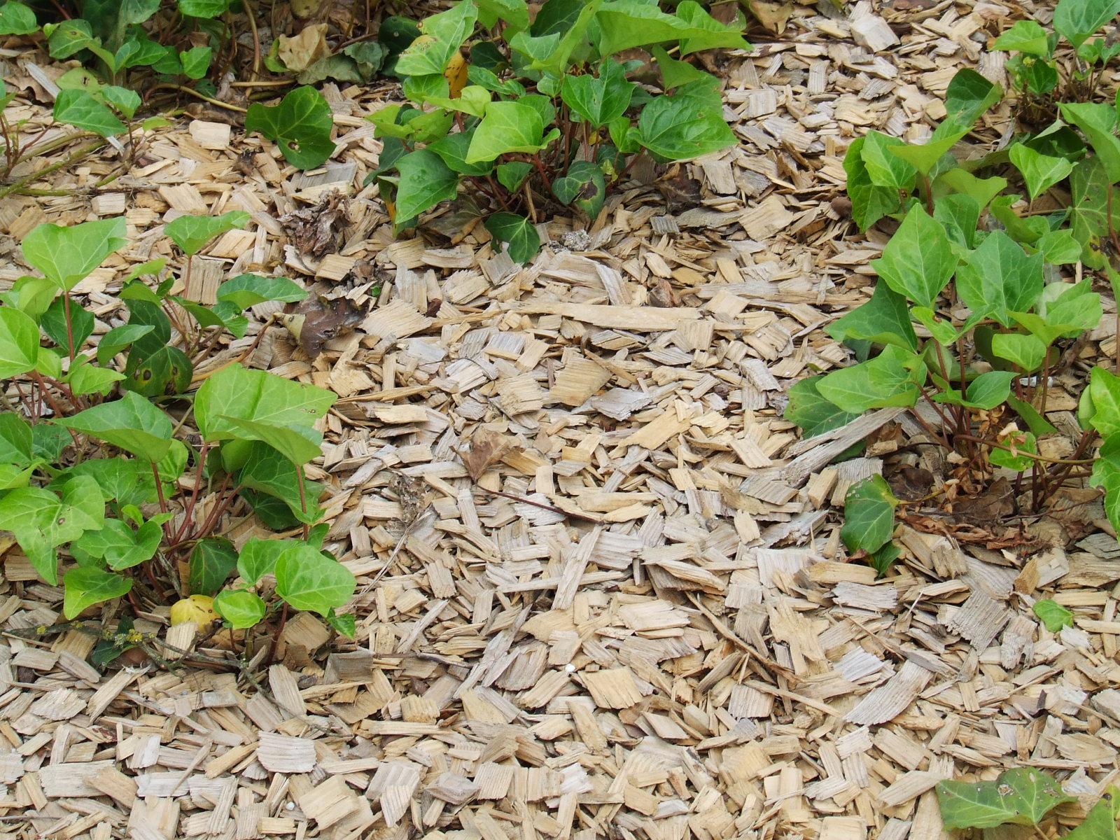 Déchets Verts, Humus, ... | Caue dedans Copeaux De Bois Jardin