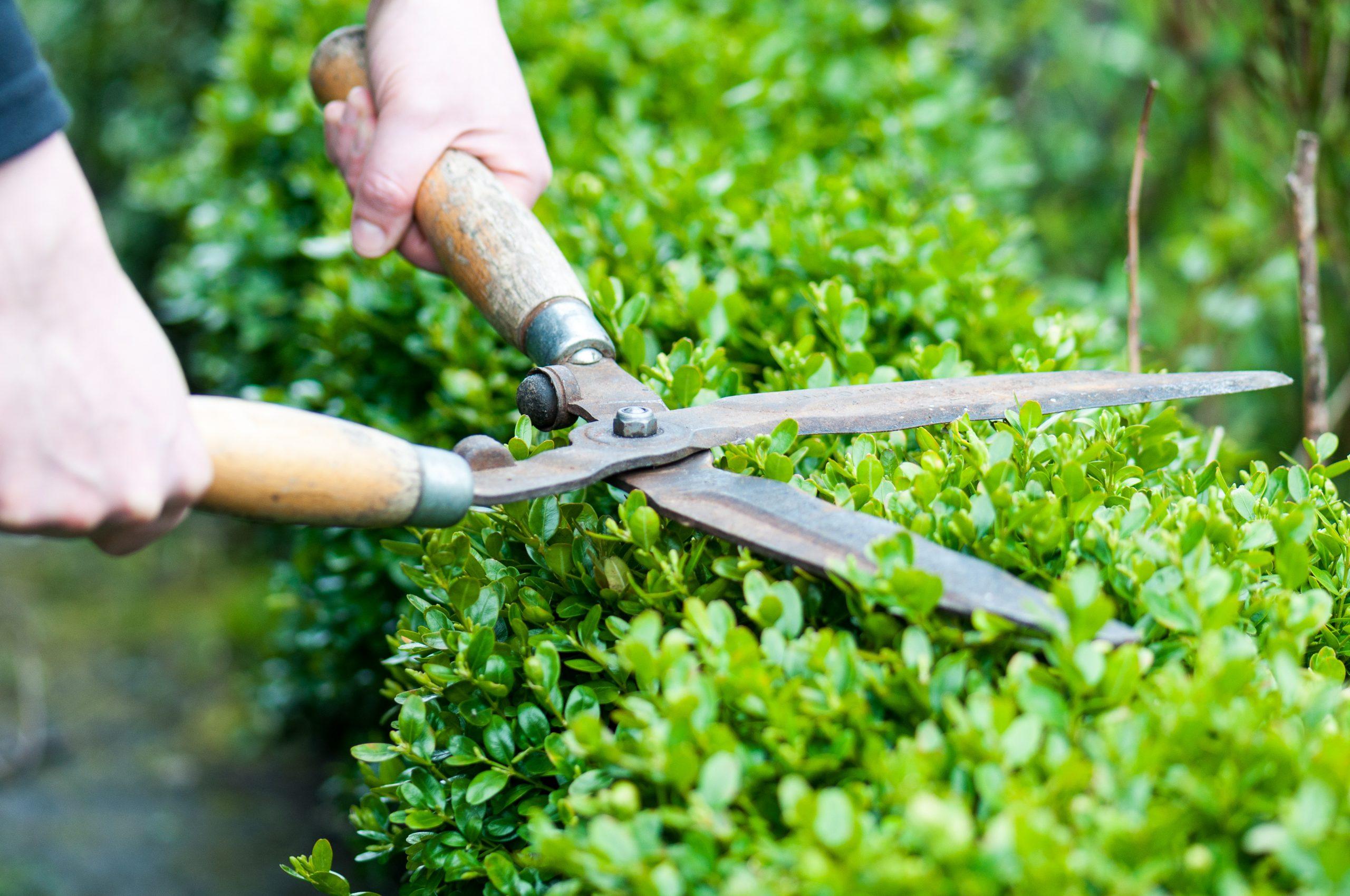 Des Haies De Séparation De Jardin Sans Trop D'entretien tout Separation De Jardin
