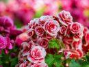 Des Plantes Lumineuses Pour Éclairer Les Zones D'ombre tout Arbre Pour Petit Jardin