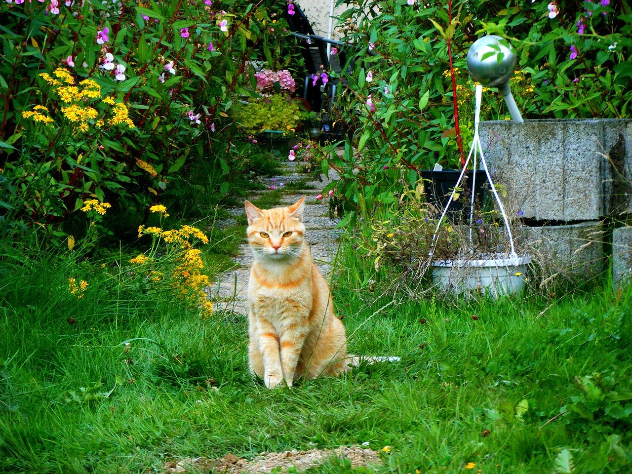▷ 7 Astuces Pour Éloigner Les Chats De Son Jardin Et De Son ... encequiconcerne Repousse Chat Jardin