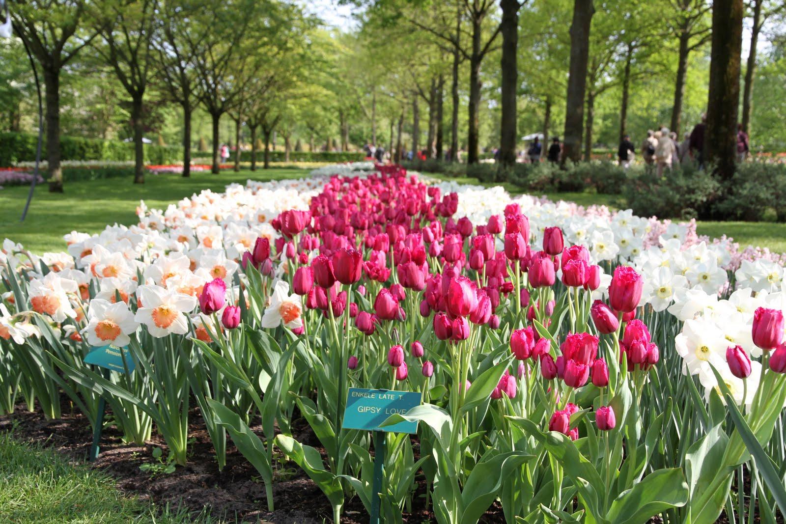 El Mundo De Maria: Keukenhof : Le Plus Beau Jardin ... à Jardin De Keukenhof