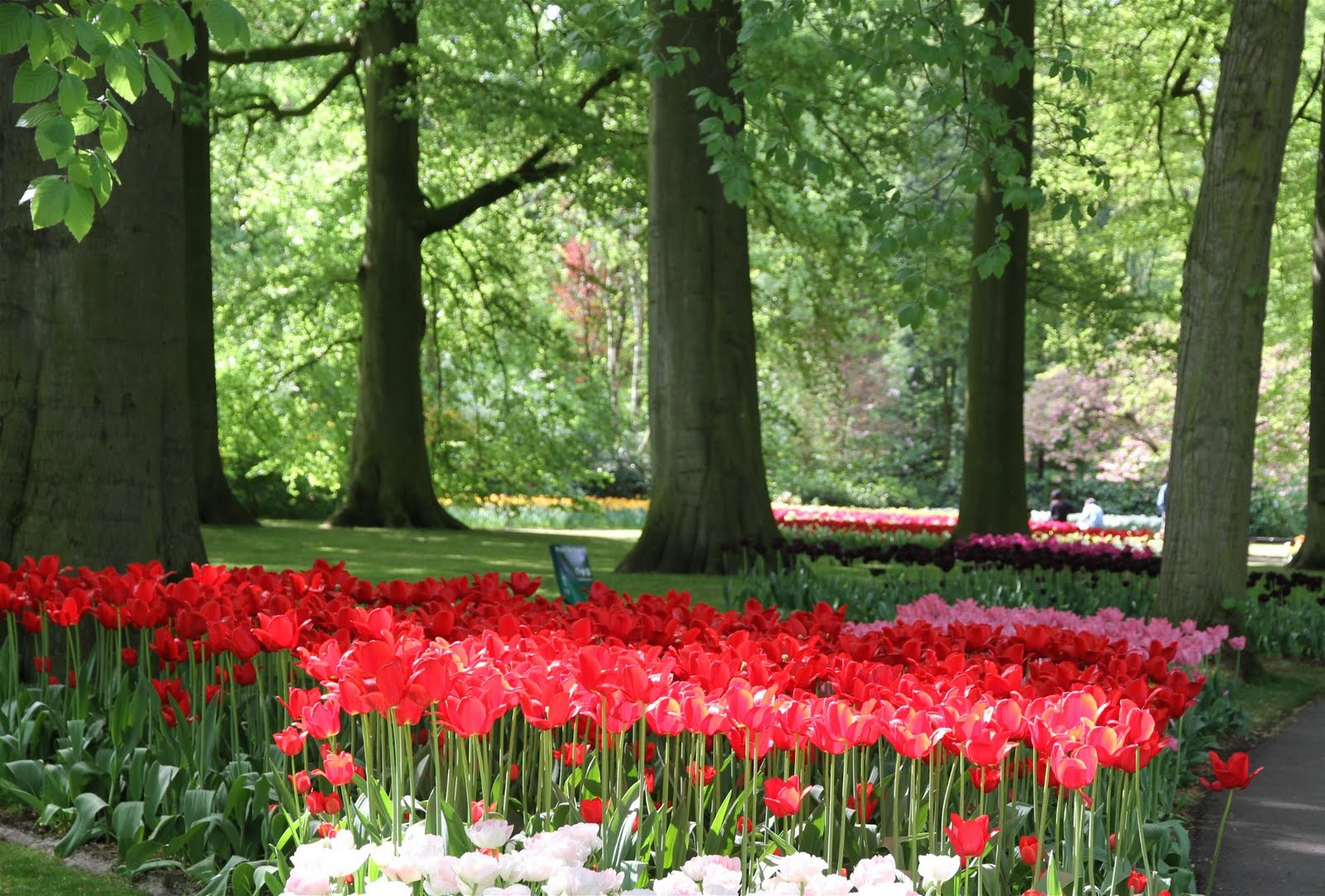 El Mundo De Maria: Keukenhof : Le Plus Beau Jardin ... encequiconcerne Jardin De Keukenhof