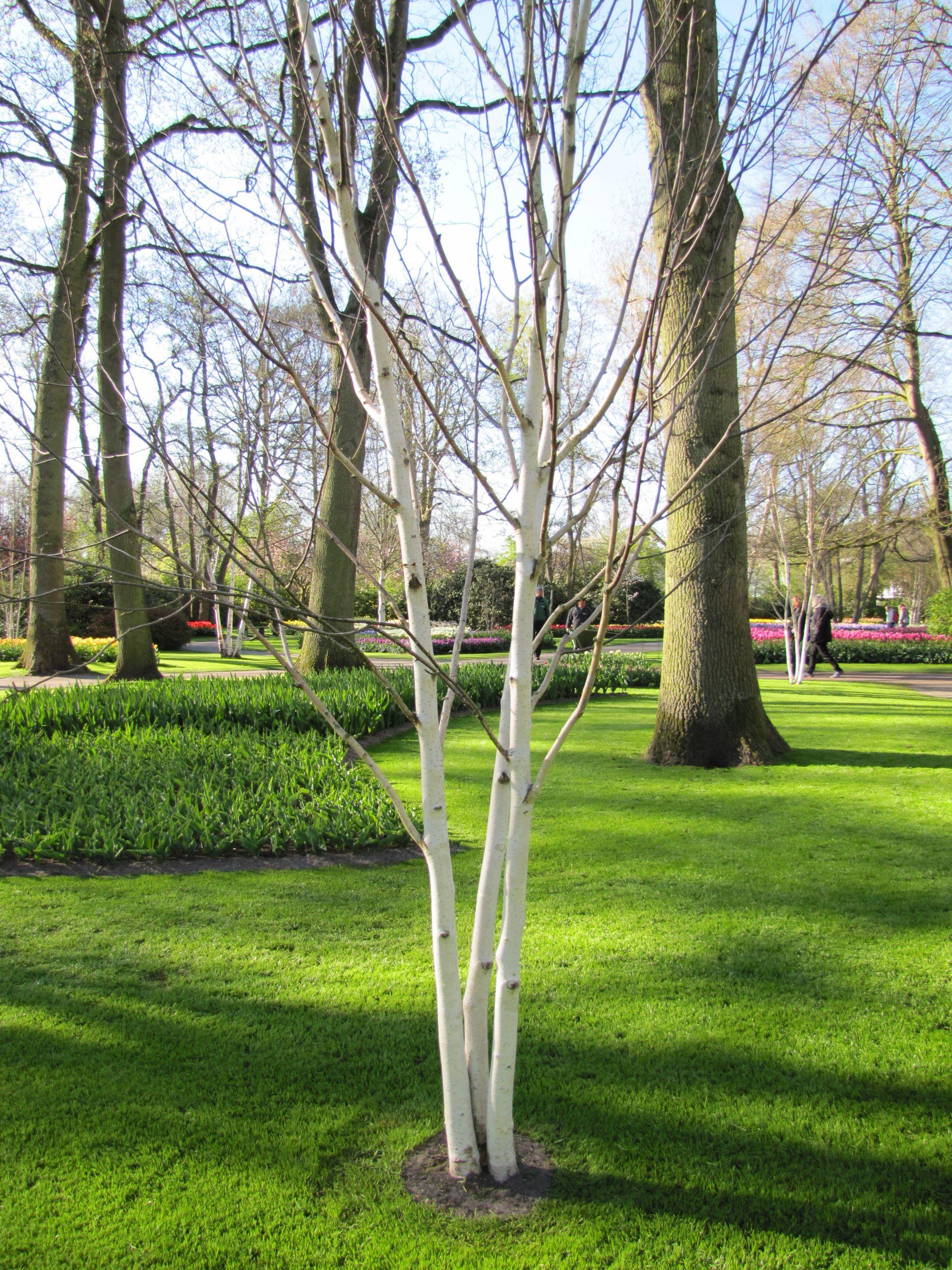 File:10 Avril 2019 - 5 - Visite De Keukenhof - Canon - 216 ... à Jardin De Keukenhof