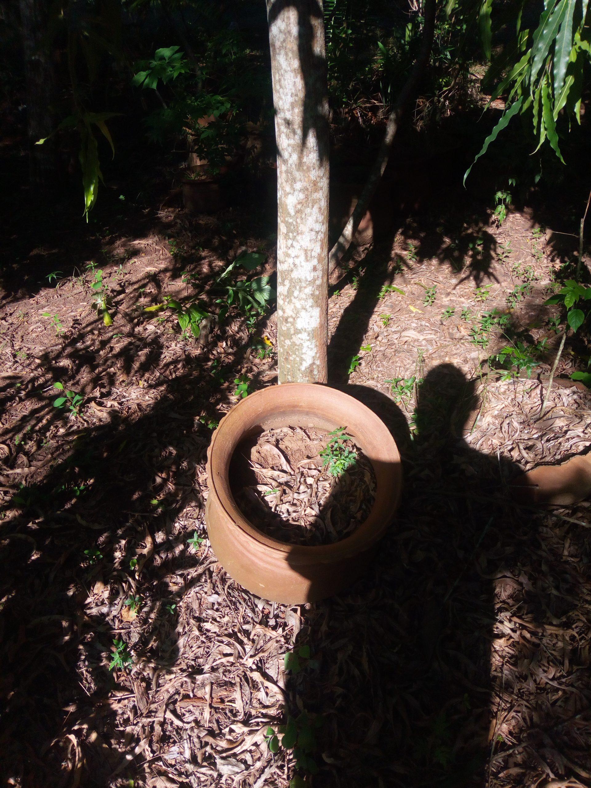 File:jardin Botanique 16.jpg - Wikimedia Commons destiné Jarre De Jardin