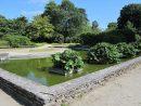 File:jardin Des Plantes D'avranches - Bassin Des Gunneras ... intérieur Plante Bassin De Jardin