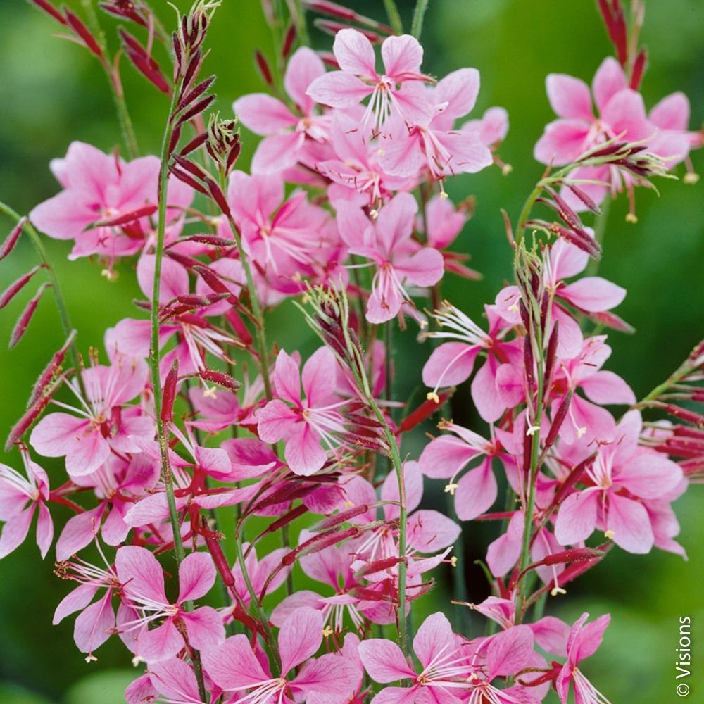 Fleur Vivace : Conseils De Plantation à Arbre Pour Petit Jardin