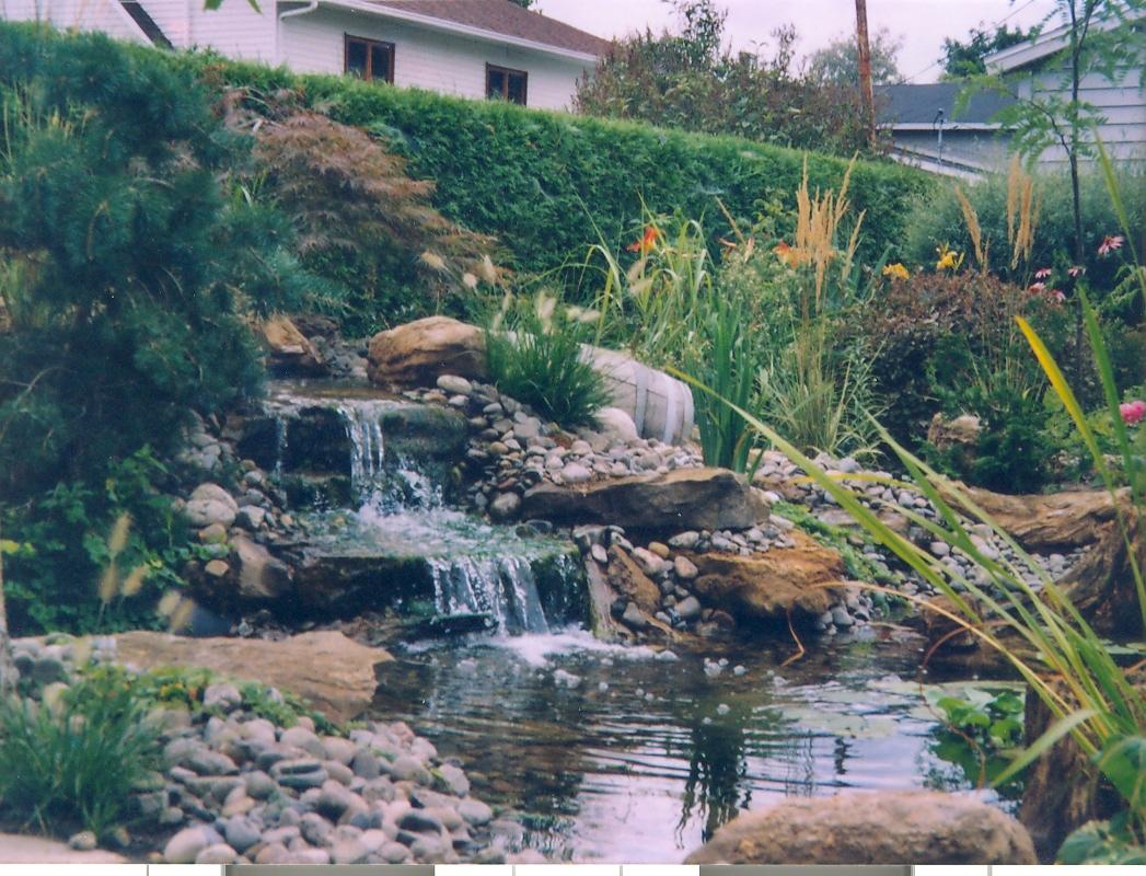 Gestion Conseil Horti-Vert encequiconcerne Plante Bassin De Jardin