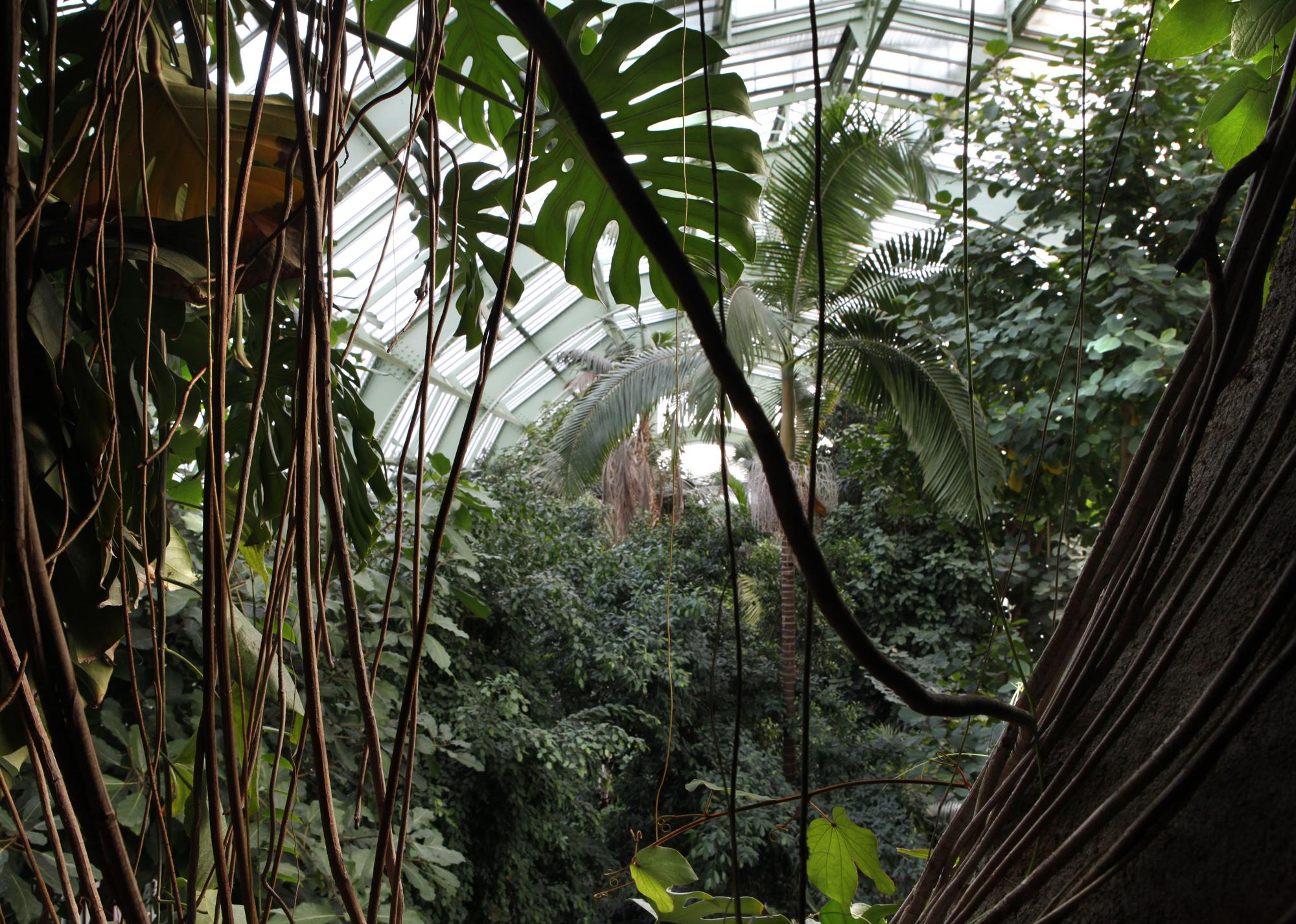 Grandes Serres Du Jardin Des Plantes (Greenhouses ... dedans Serre De Jardin Amazon