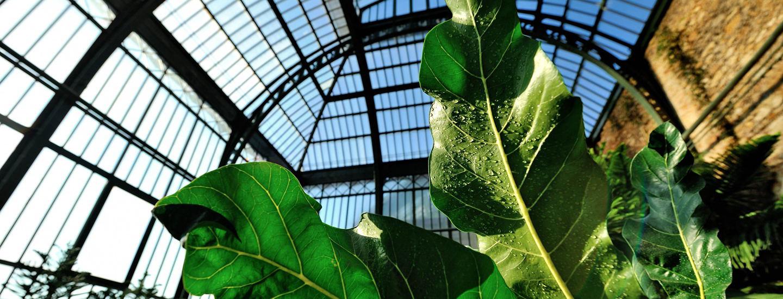 Grandes Serres Du Jardin Des Plantes (Greenhouses) | Muséum ... intérieur Verriere Jardin