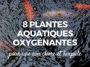 Hanneton : Identification, Dégâts Et Moyens De Lutte serapportantà Plante Bassin De Jardin
