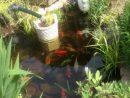 Impressionnant Pompe De Jardin En Fonte tout Plante Bassin De Jardin