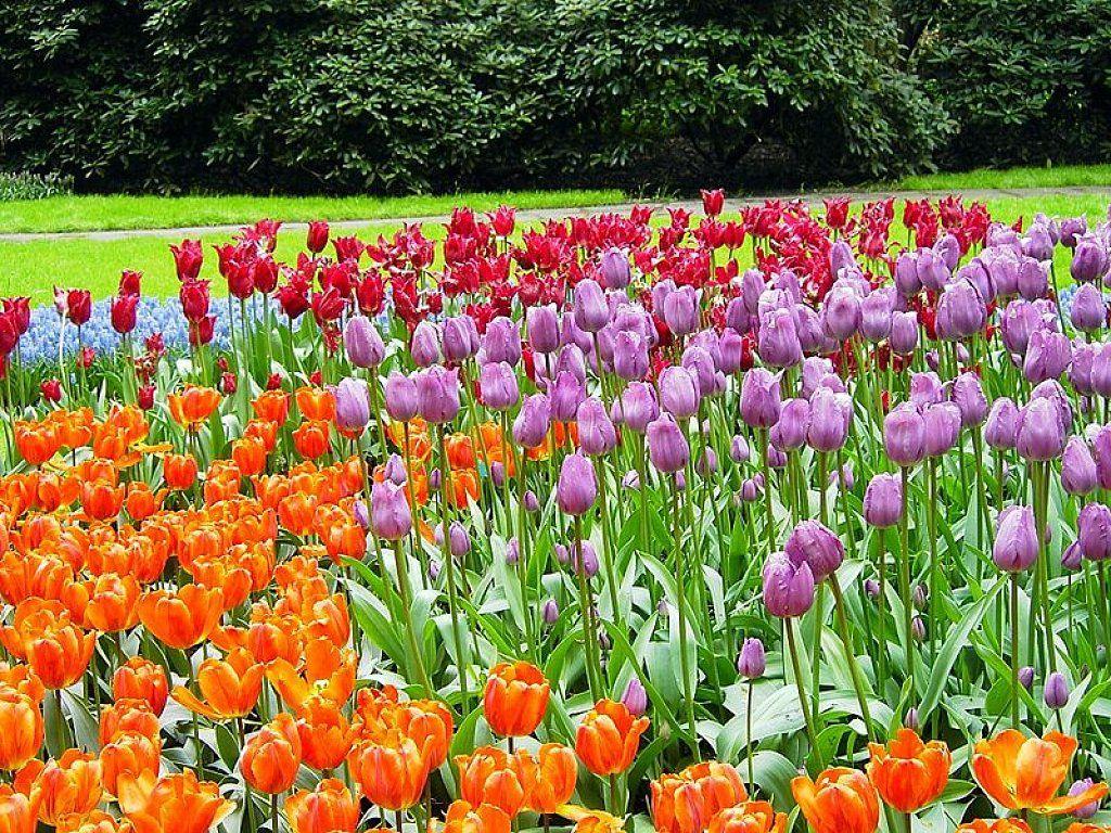 Jardín De Keukenhof | Cuidar De Tus Plantas Es Facilisimo ... pour Jardin De Keukenhof