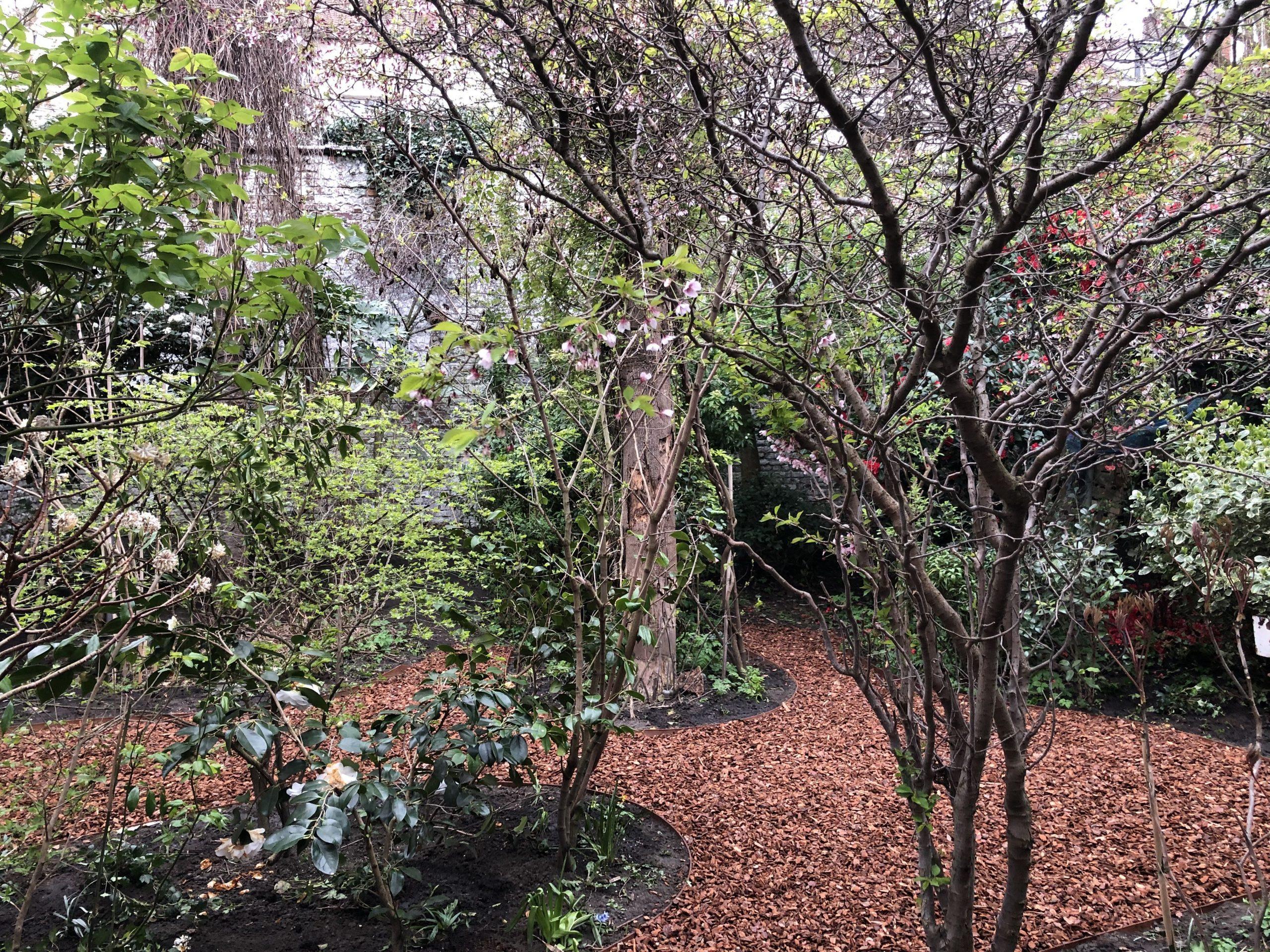 Jardin De Ville De 200M2 // Bruxelles - Schaerbeek ... intérieur Copeaux De Bois Jardin